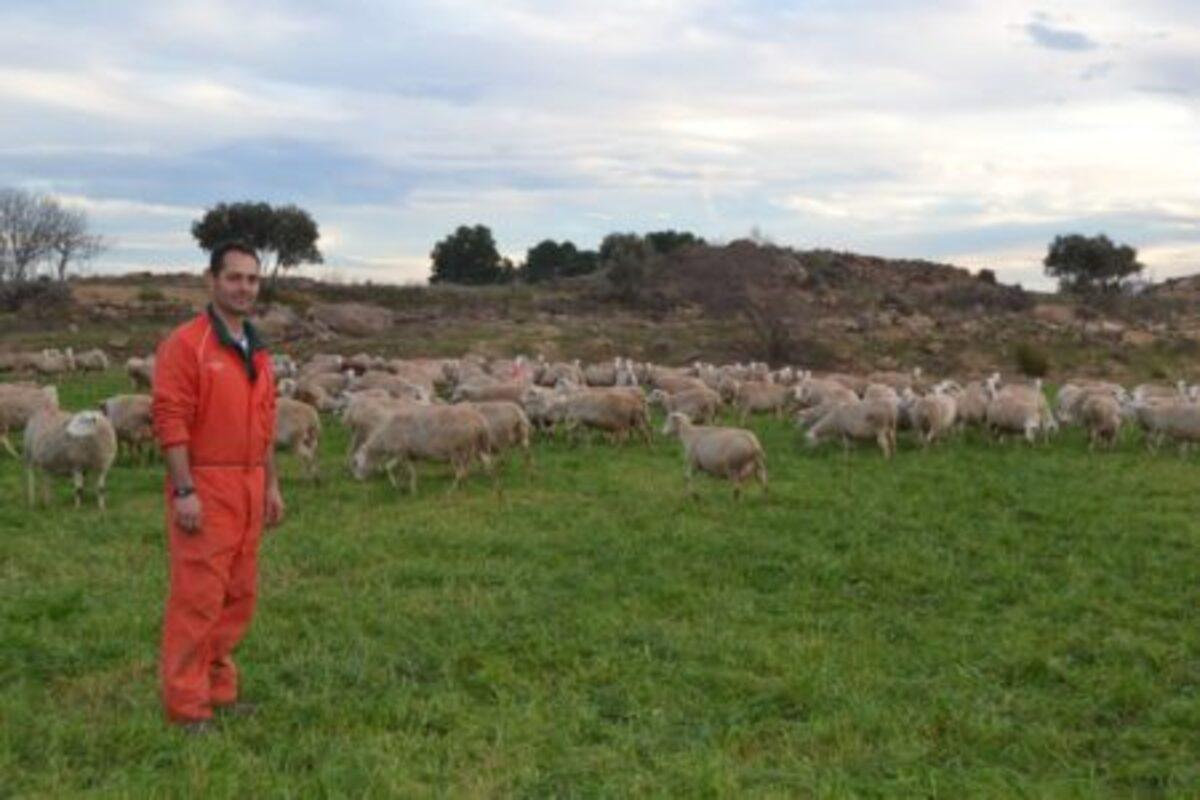 Alertan de la muerte de ovejas por los sulfatos en Caspe