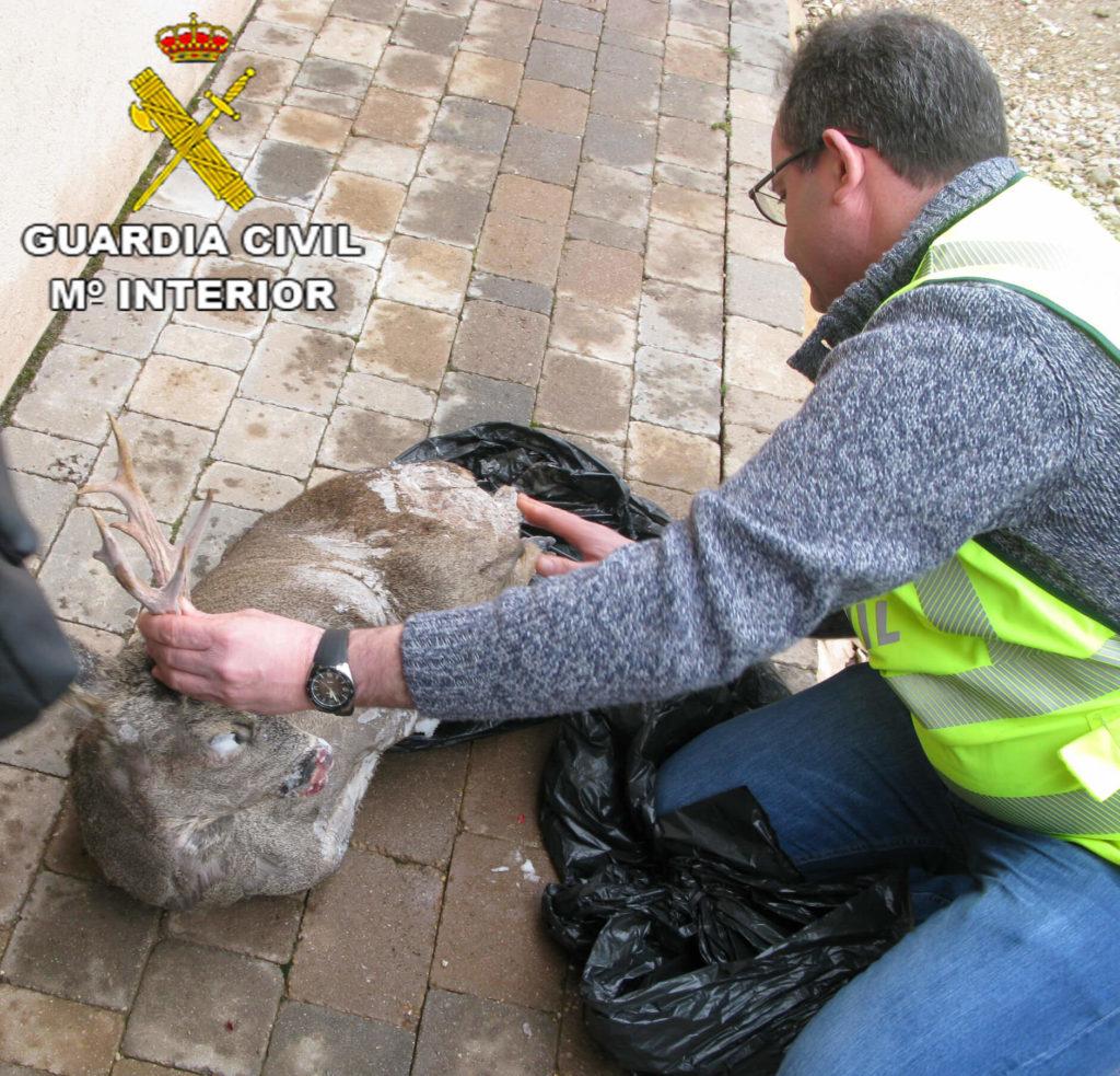 guardia civil caza furtiva ciervo
