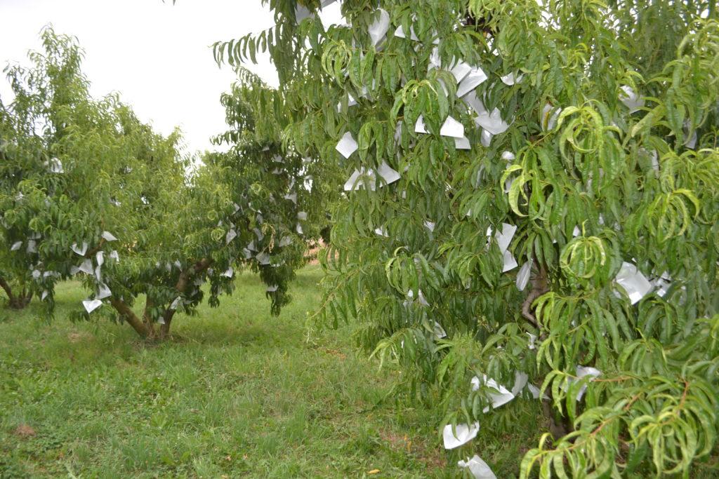 calanda-proyecto-europeo-uso-biomasa