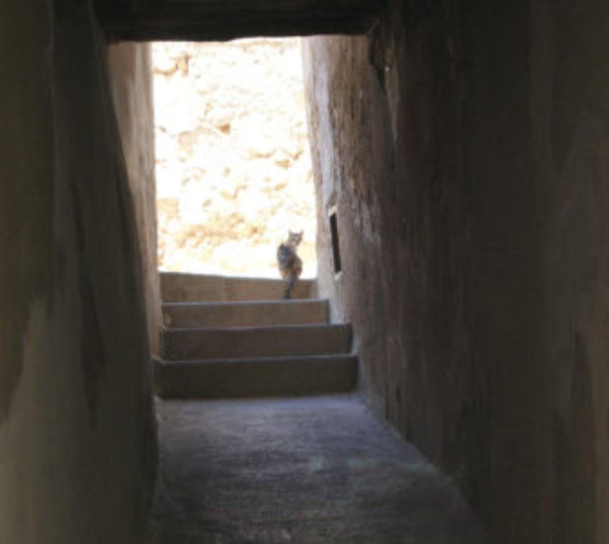 albalate-lucha-atajar-aumento-gatos