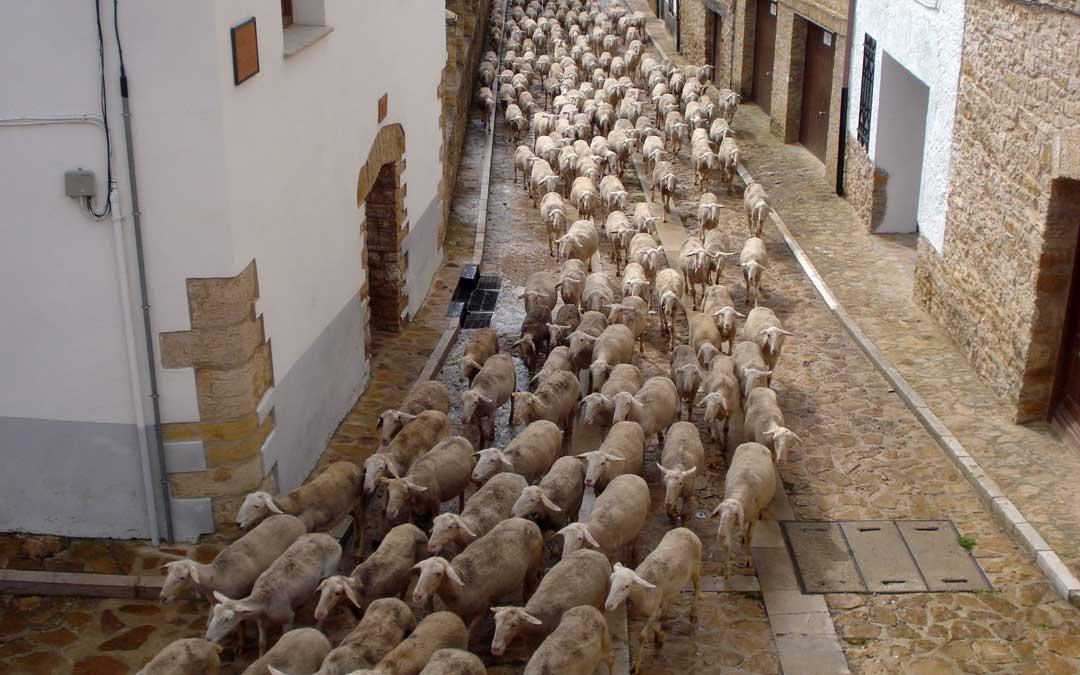 trashumancia ovejas iglesuela