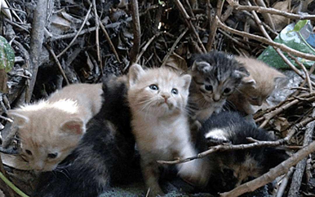 utrillas gatos