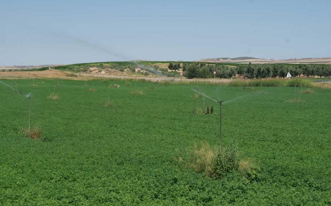 ACUAES adjudica por 18,2 millones las obras de los regadíos de Fuentes de Ebro