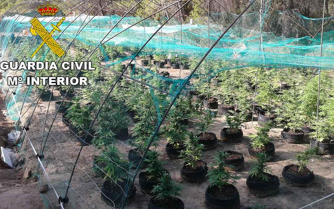 Marihuana en Arens de Lledo