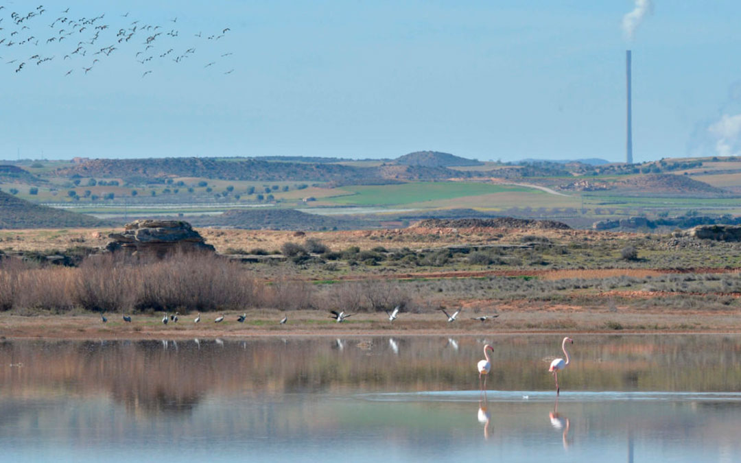 aves birding estanca alcañiz