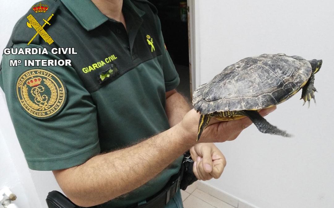 tortuga-guardia-civil