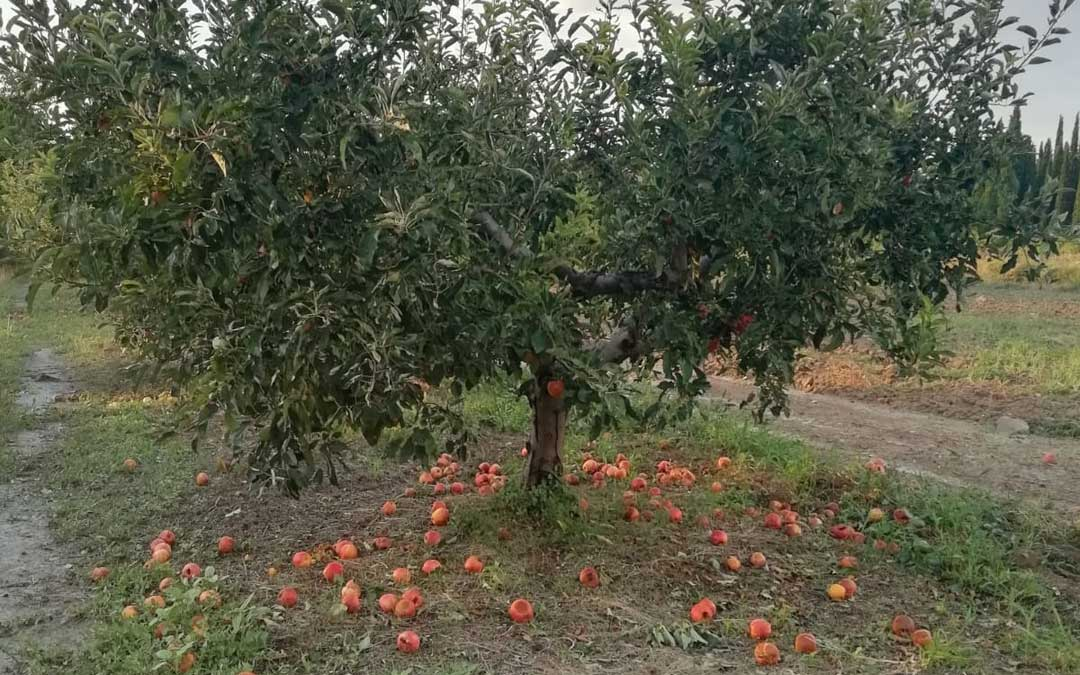 Albalate-granizo-arbol