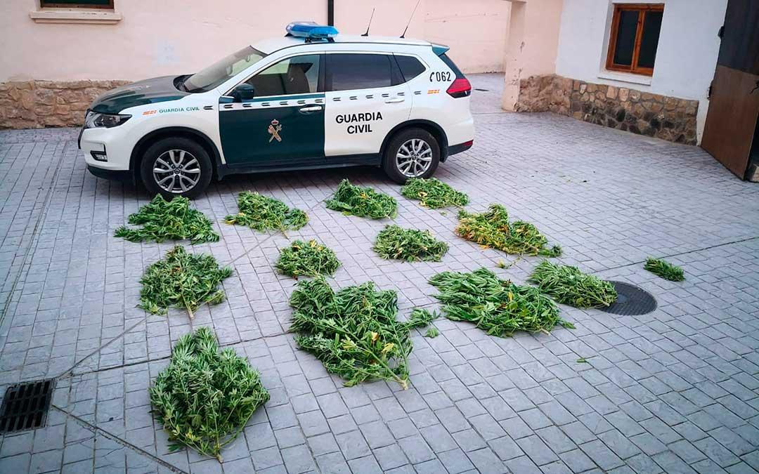 marihuana-Bajo-Aragon