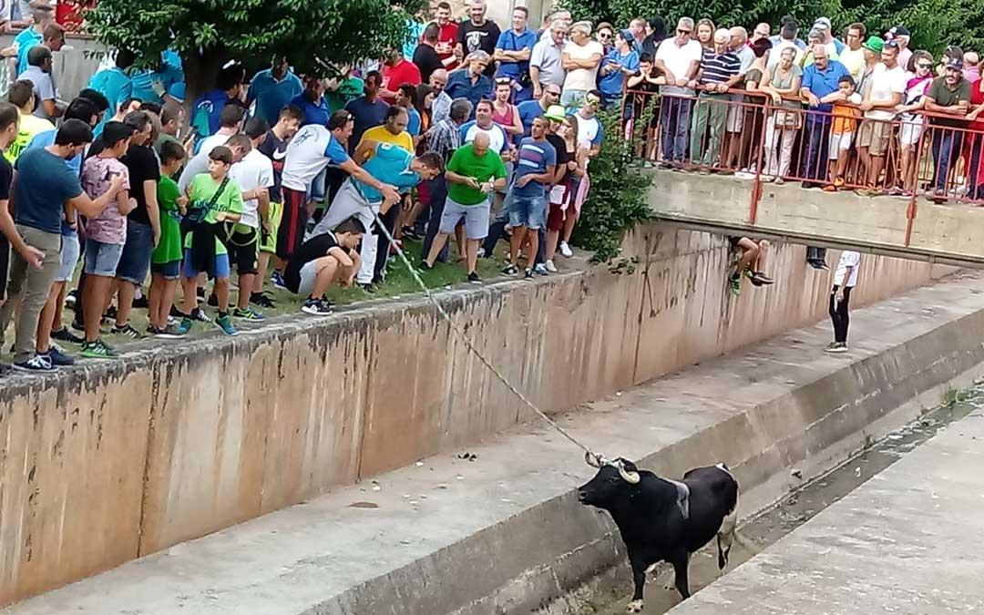 El toro fue rescatado por los sogueros, que lo condujeron hasta el final del canal