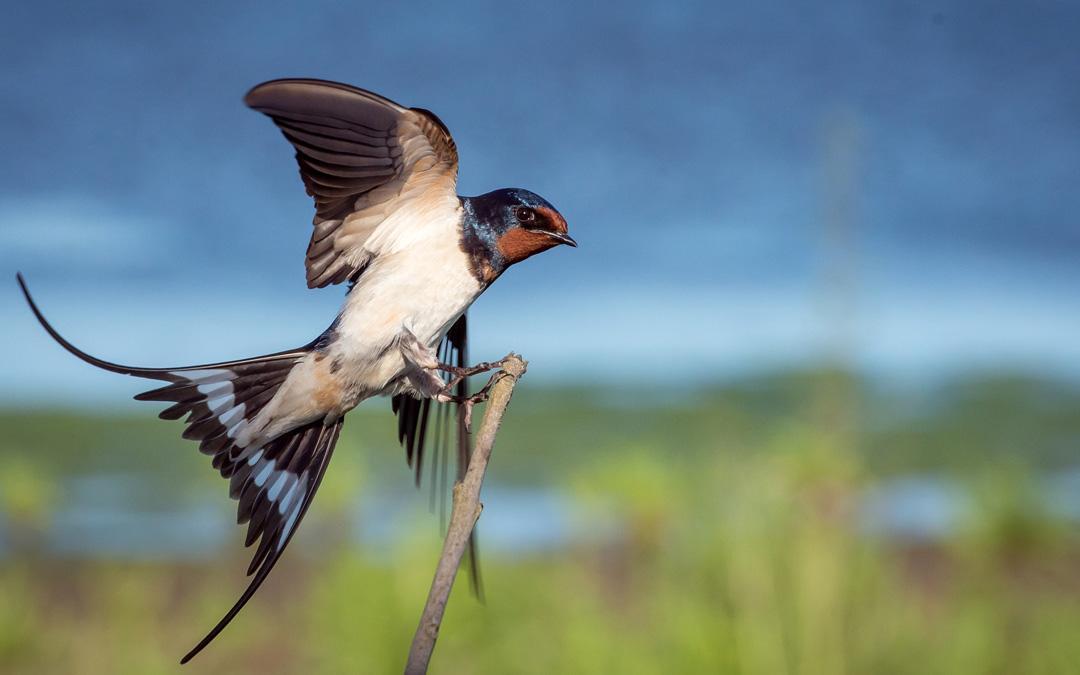 safari-fotografia-ornitolog