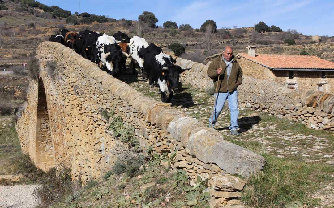 Foto de archivo. Un rebaño de vacas a su paso por La Iglesuela del Cid./ Ayto. Iglesuela