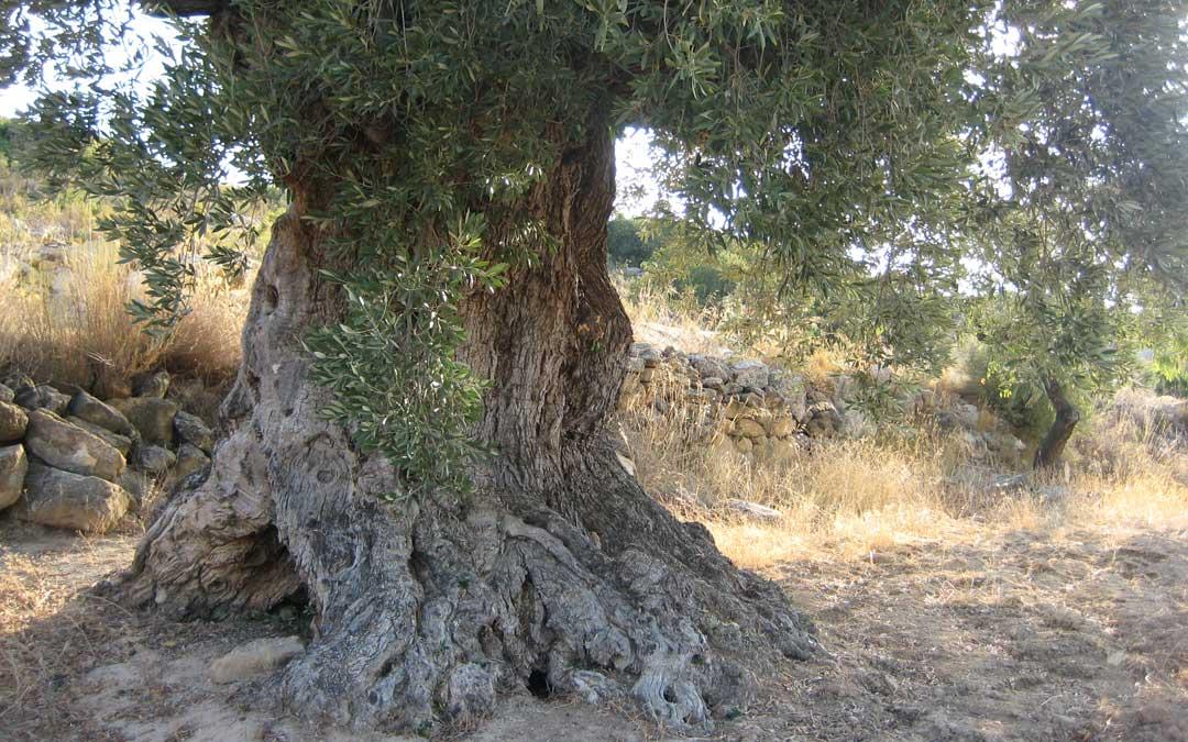 olivera tancao valdealgorfa