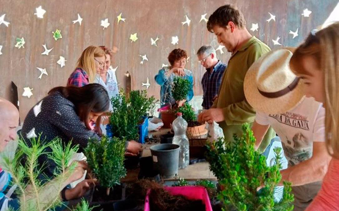 taller amigos bonsai