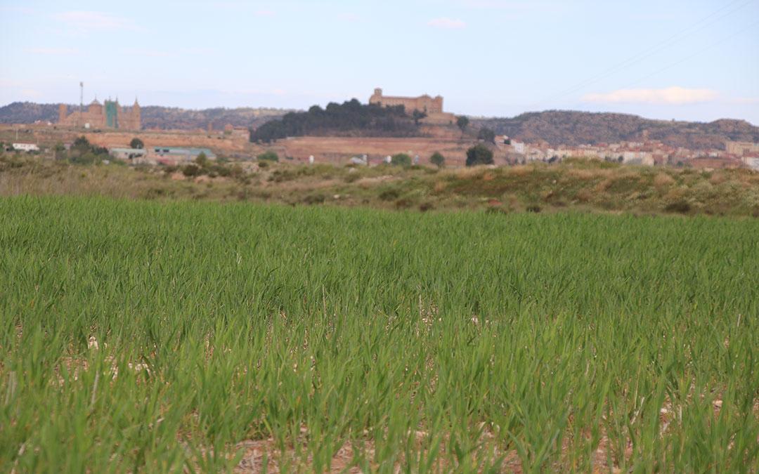 campo agricultura cereal cebada castillo alcaniz