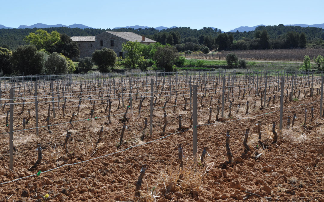 La Asociación de vinos de la IGP Bajo Aragón celebrará el concurso 2021 en Cretas