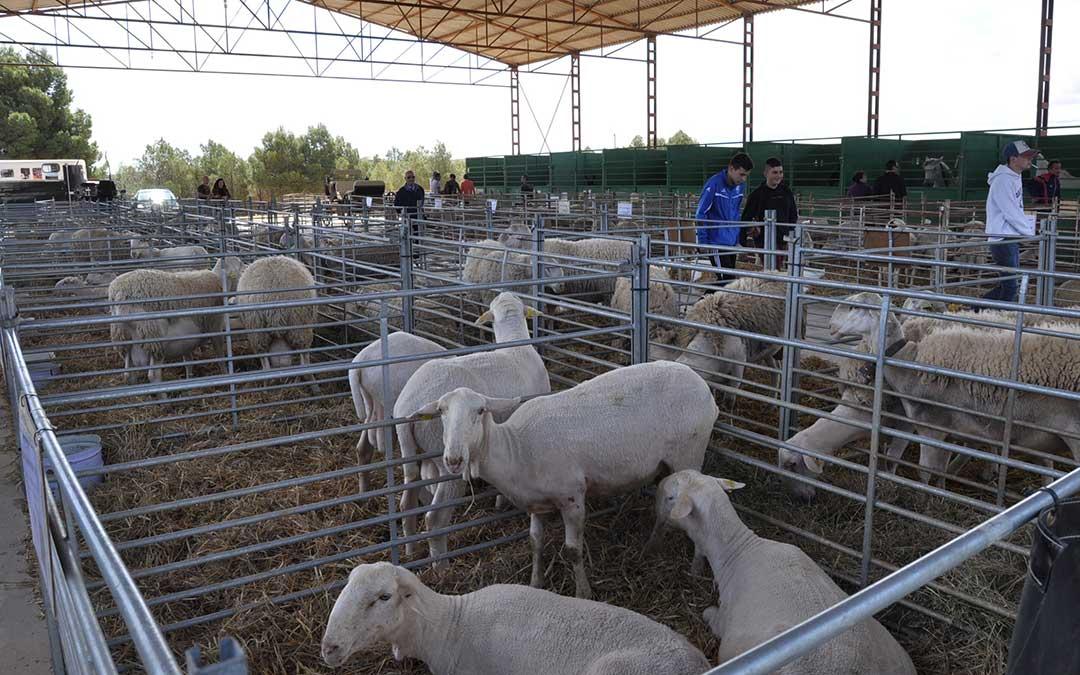 Feria Santa Quiteria Samper