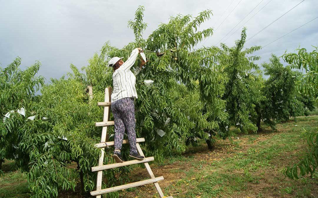 Calanda recupera su feria agroalimentaria tras treinta años