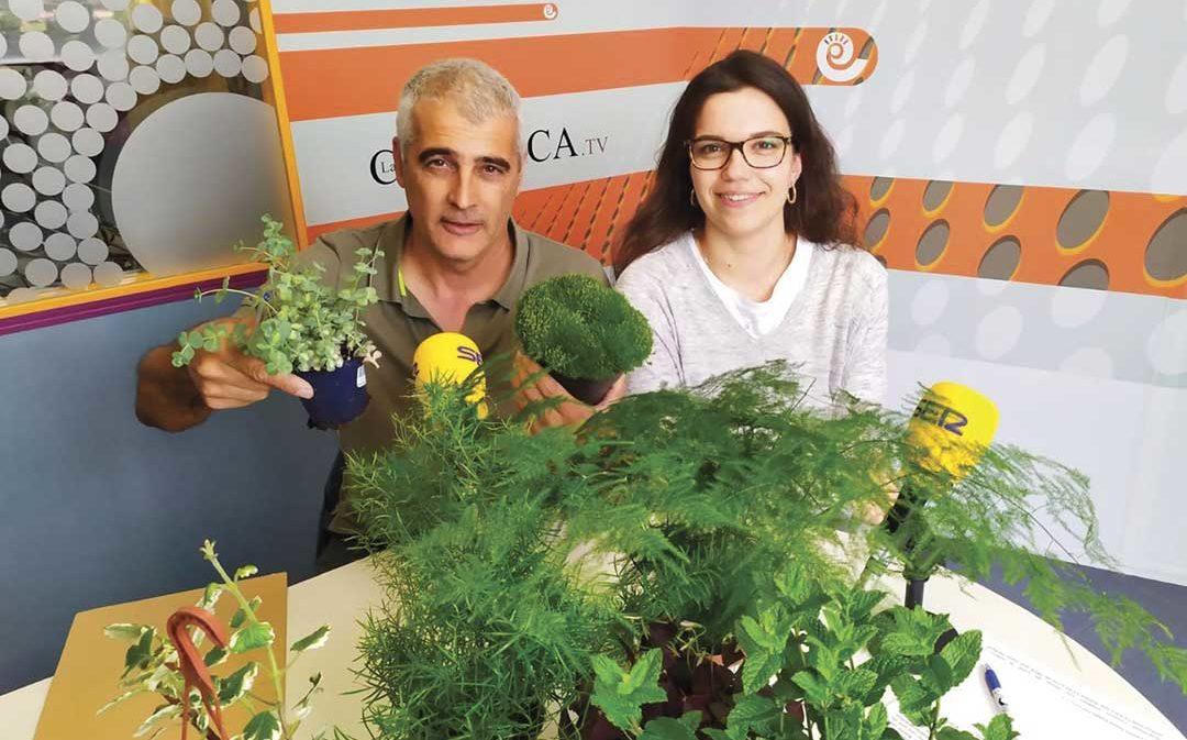 Biodiversidad y plantas verdes de balcón