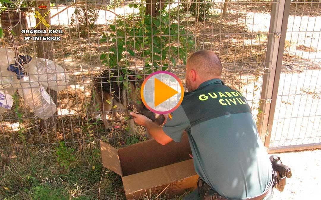 Rescatan a 6 cachorros enterrados vivos en Alcañiz