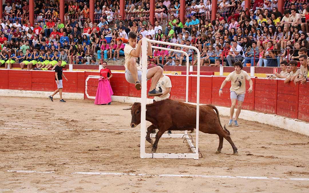 alcaniz-futbol-vaca