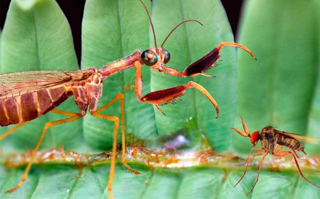 Hallan en Utrillas un insecto fosilizado con 105 millones de antigüedad