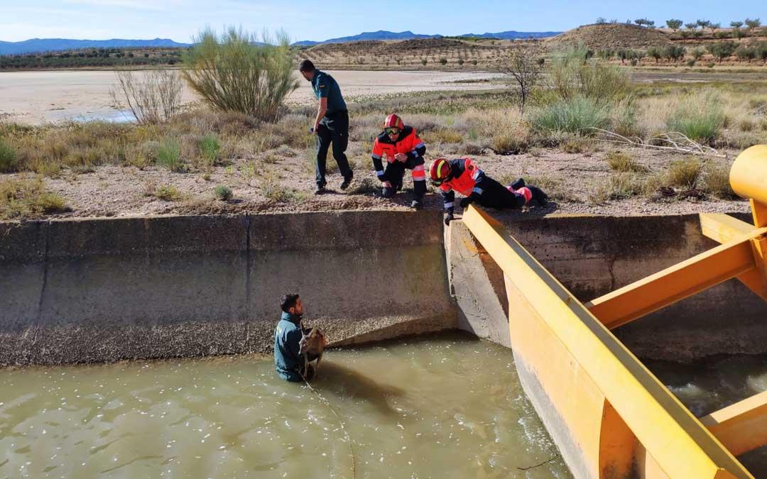 Guardia Civil y Bomberos de Alcañiz rescantando dos corzos en el canal de Calanda / AUGC