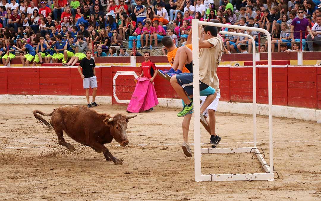 futbol-vaca-porteria