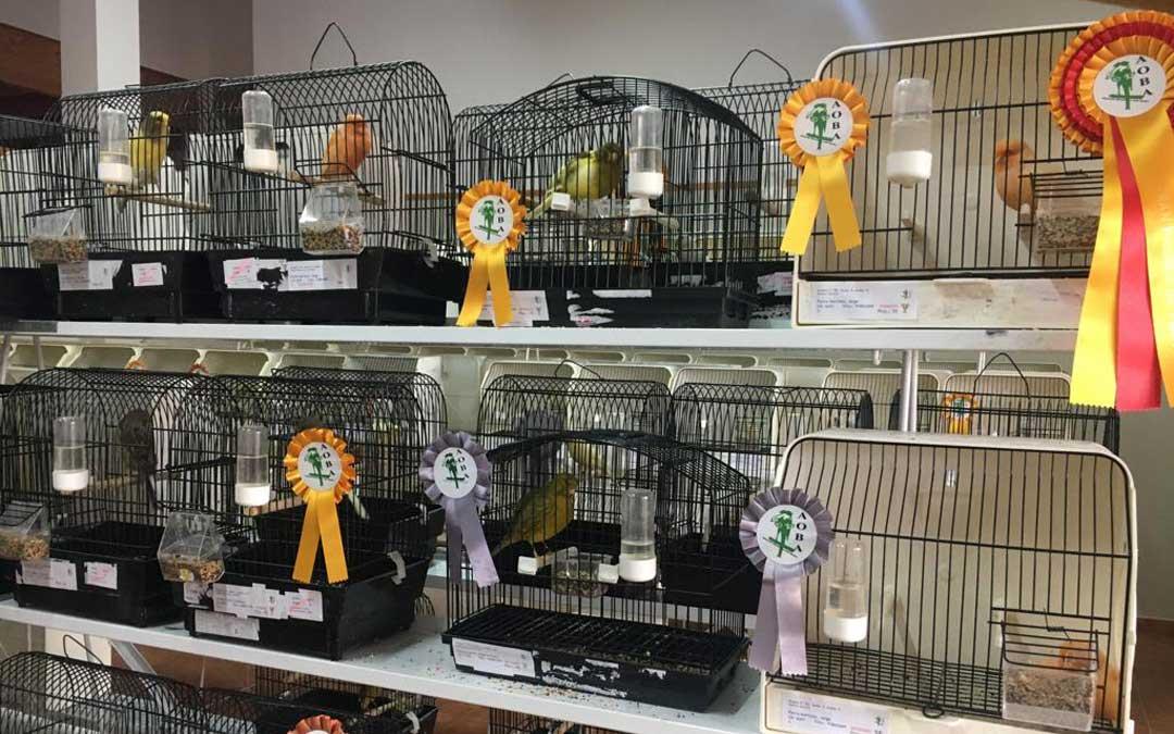 En la exposición se pueden encontrar pájaros lipocromos en bastantes de sus gamas
