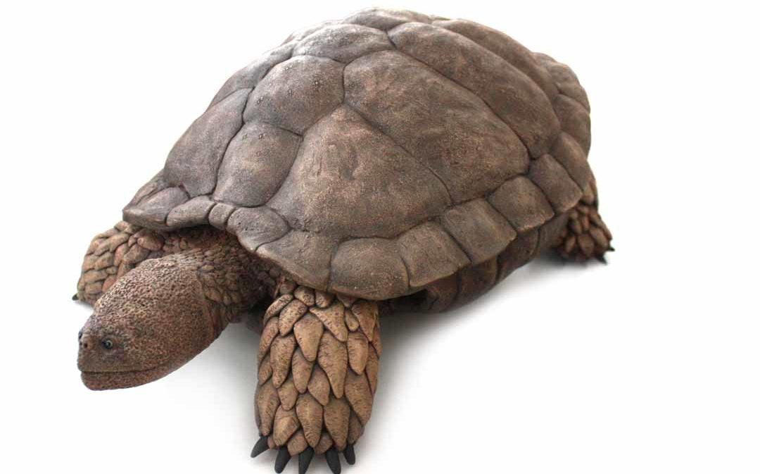 Aragochersis, una nueva tortuga del Cretácico en la mina de Ariño