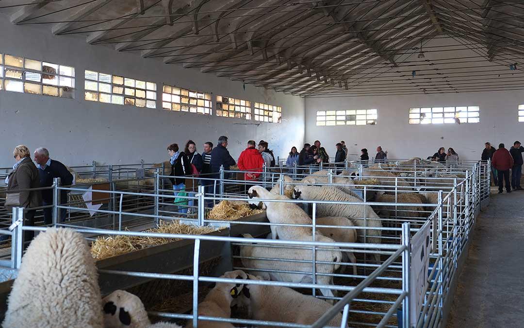 Multitud de personas se acercaron a conocer los diferentes ejemplares de las razas de oveja./ Alicia Martín