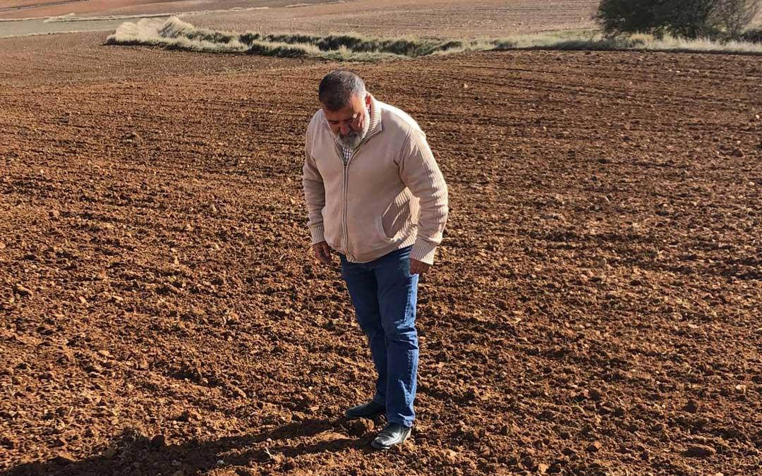 Herminio Sancho (PSOE) mirando los campos sembrados en Mezquita de Jarque