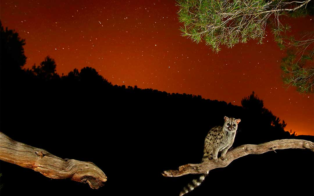 'La estrella del bosque' de Jonathan Díaz Marbá.
