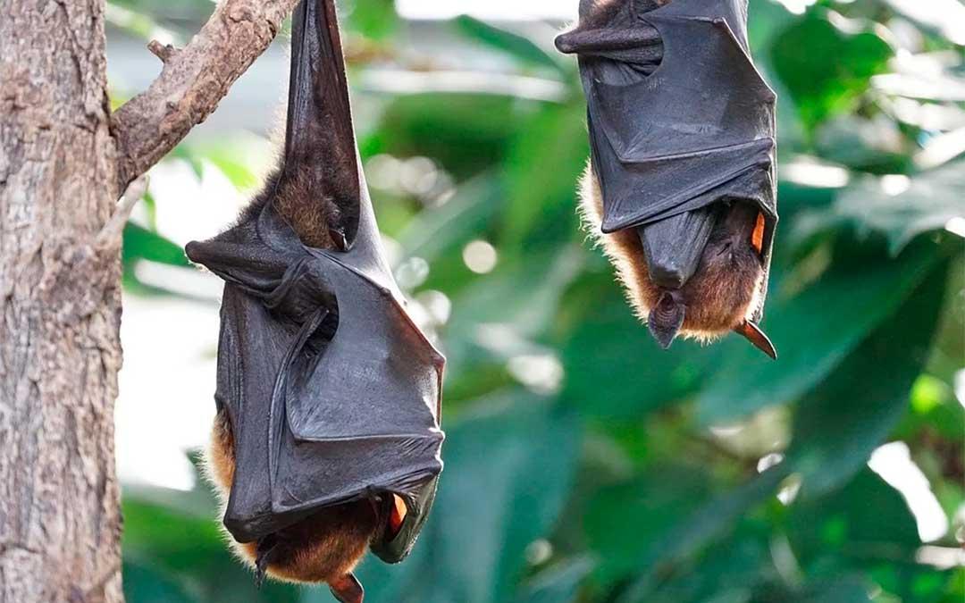 Murciélagos./ Pixabay