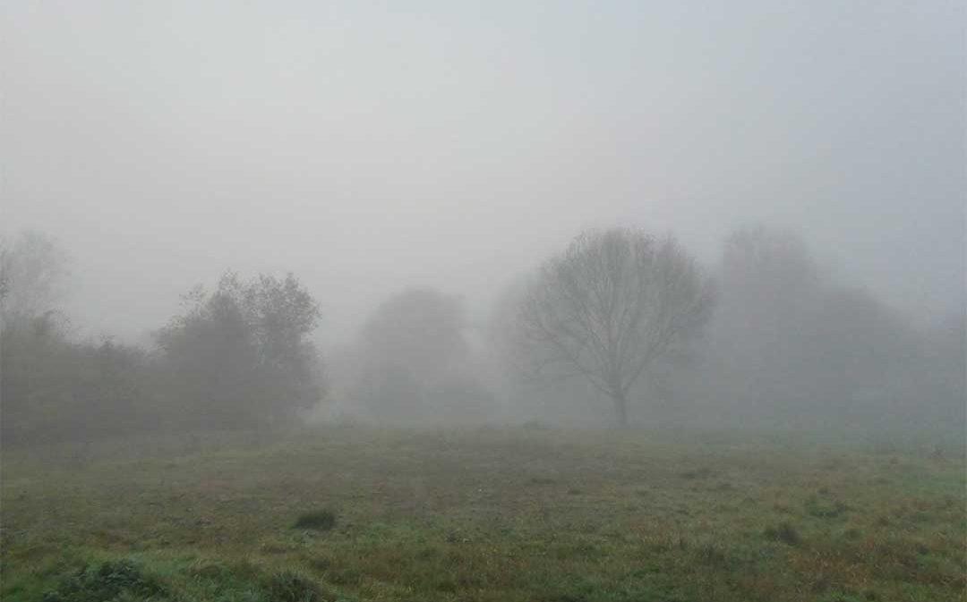 La niebla y las heladas frenan la floración de los frutales en zonas bajas