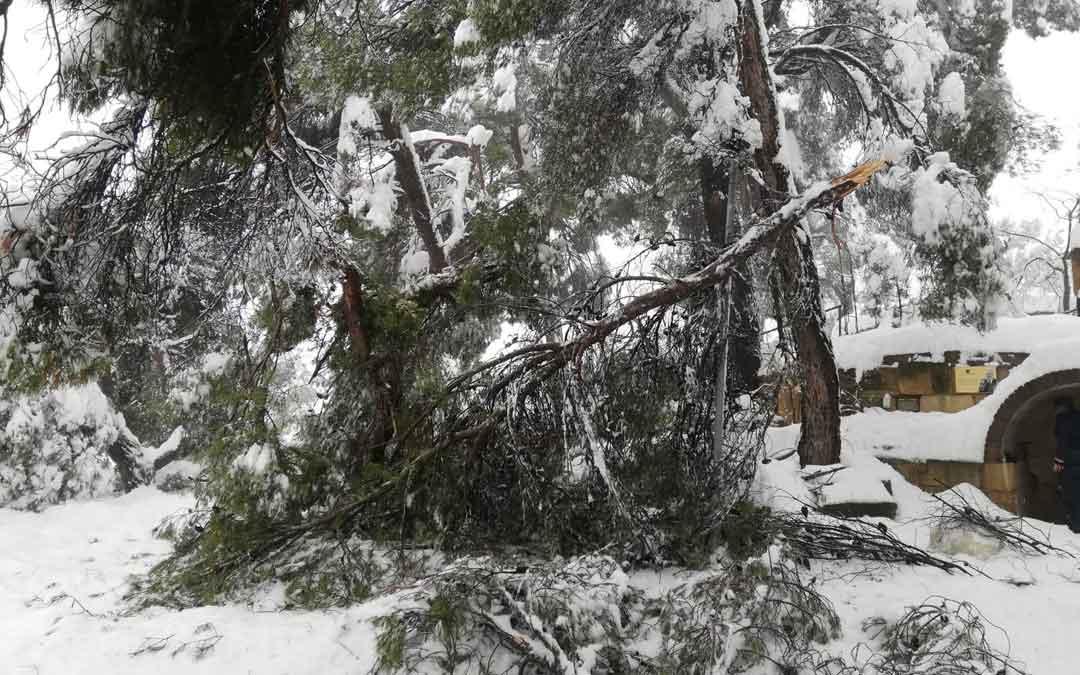 Árboles rotos por el peso de la nieve en el camino al Calvario de Torrecilla. / Ayuntamiento de Torrecilla de Alcañiz