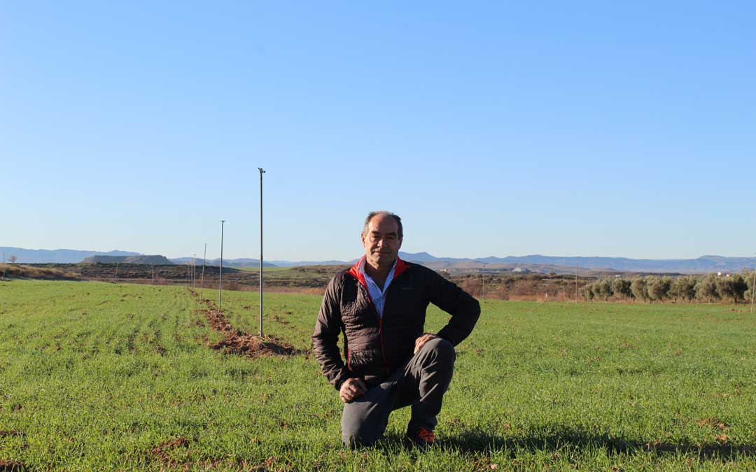 José Miguel Ayuda, en una de las parcelas de regadío del Canal Calanda-Alcañiz junto a la N-232. / B. Severino
