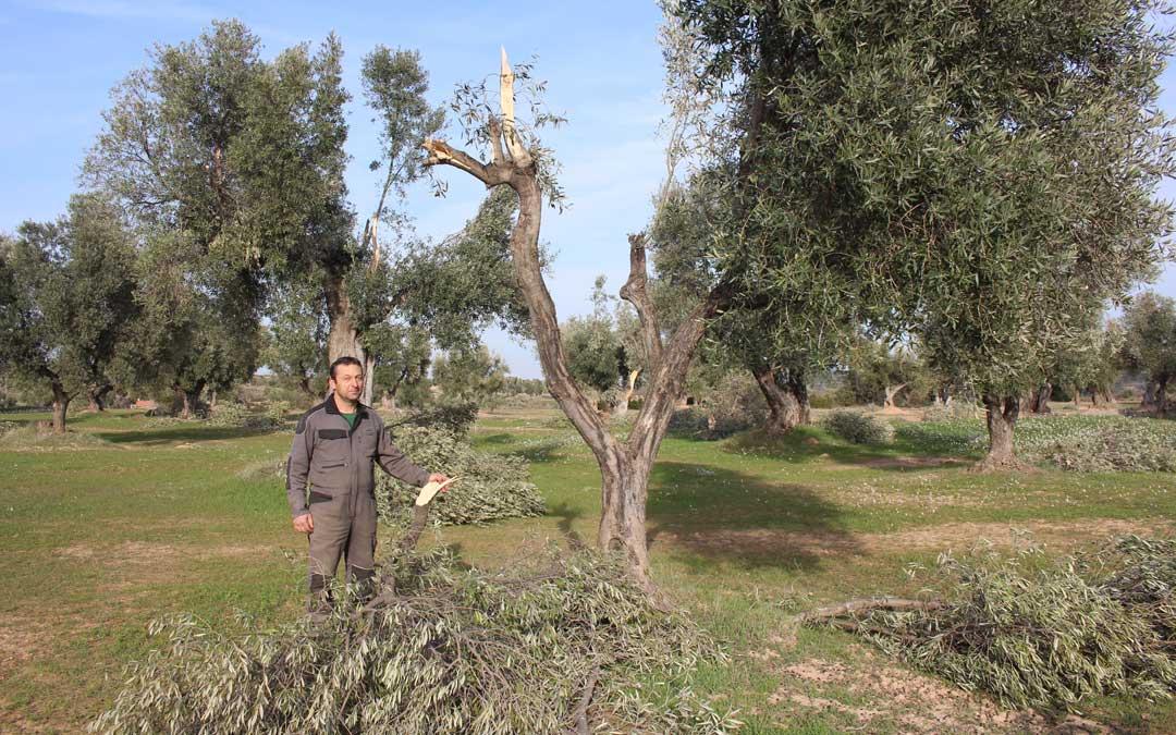El secretario provincial de UAGA en Teruel, David Andreu, en un campo de olivos de su pueblo, Valdealgorfa, afectado por el temporal / L. Castel