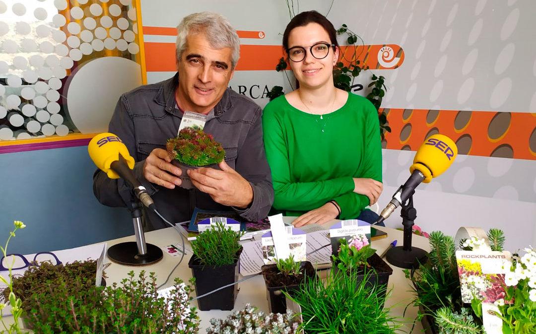 Plantas alpinas