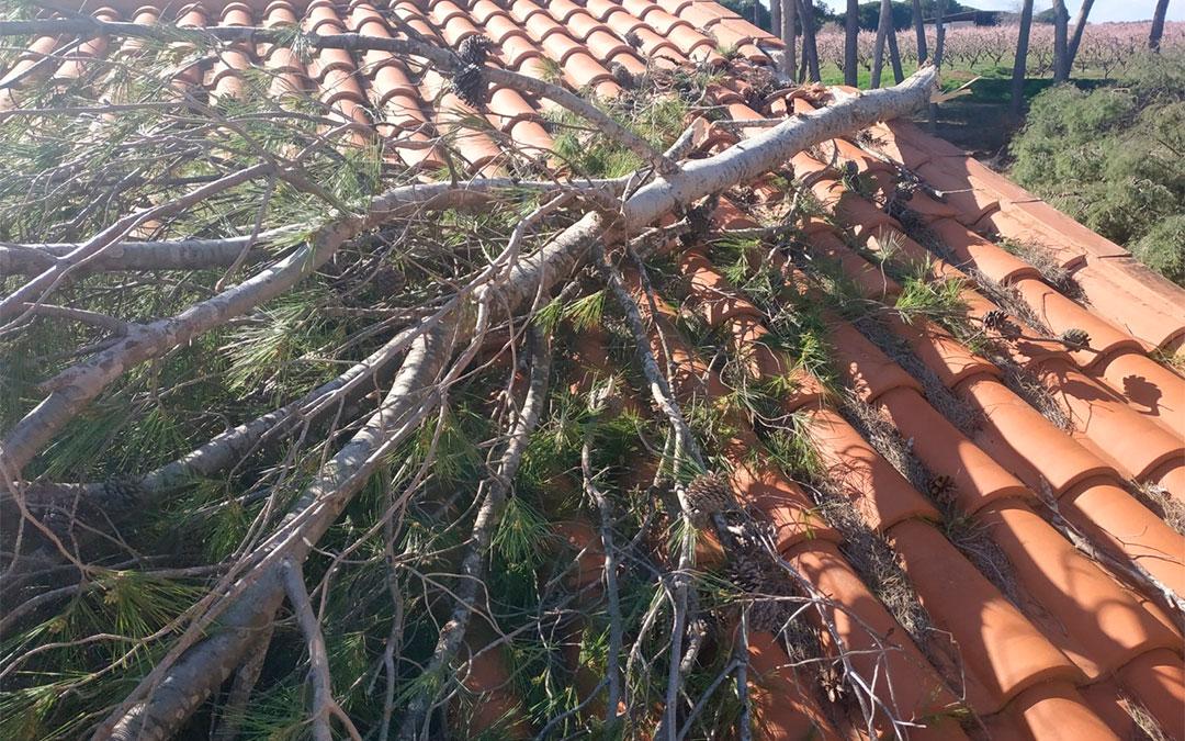 Uno de los pinos ha caído sobre un tejado./ Bomberos de la DPT