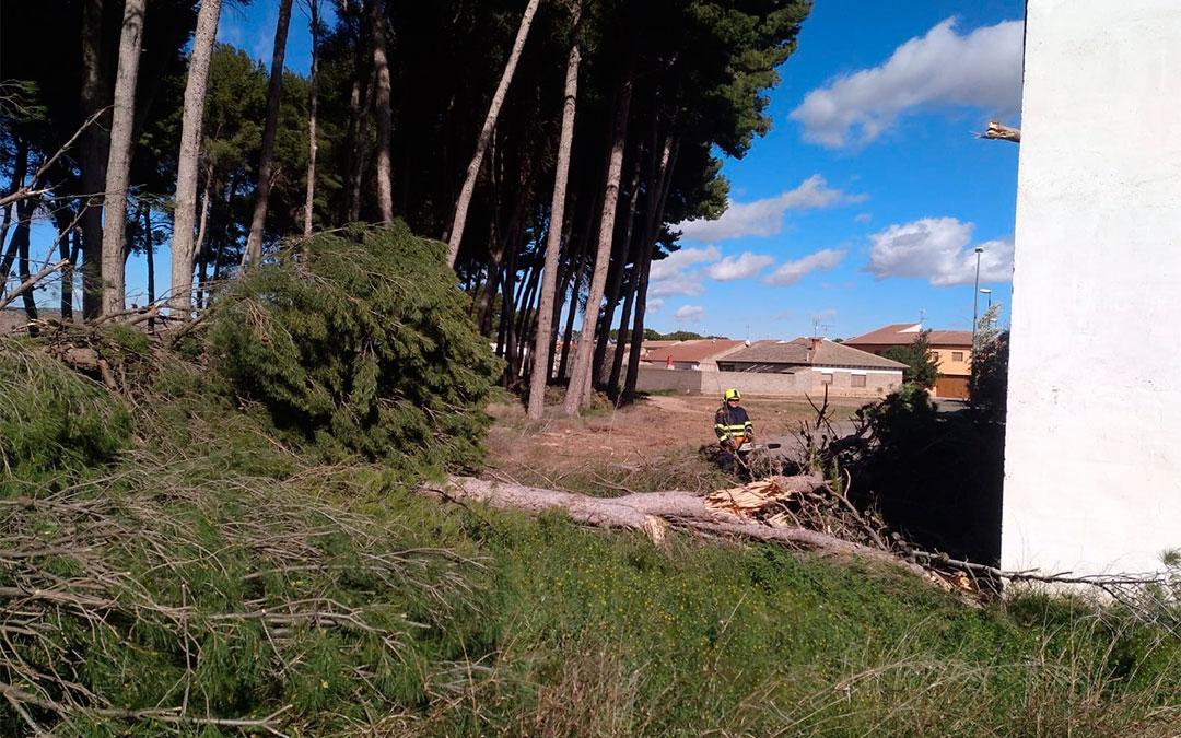 Árboles caídos en Puigmoreno./ Bomberos de la DPT