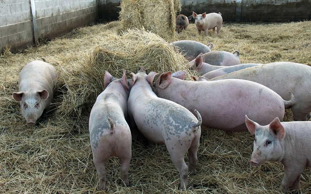 El Gobierno de Aragón impulsa iniciativas de formación profesional ligadas a la ganadería porcina