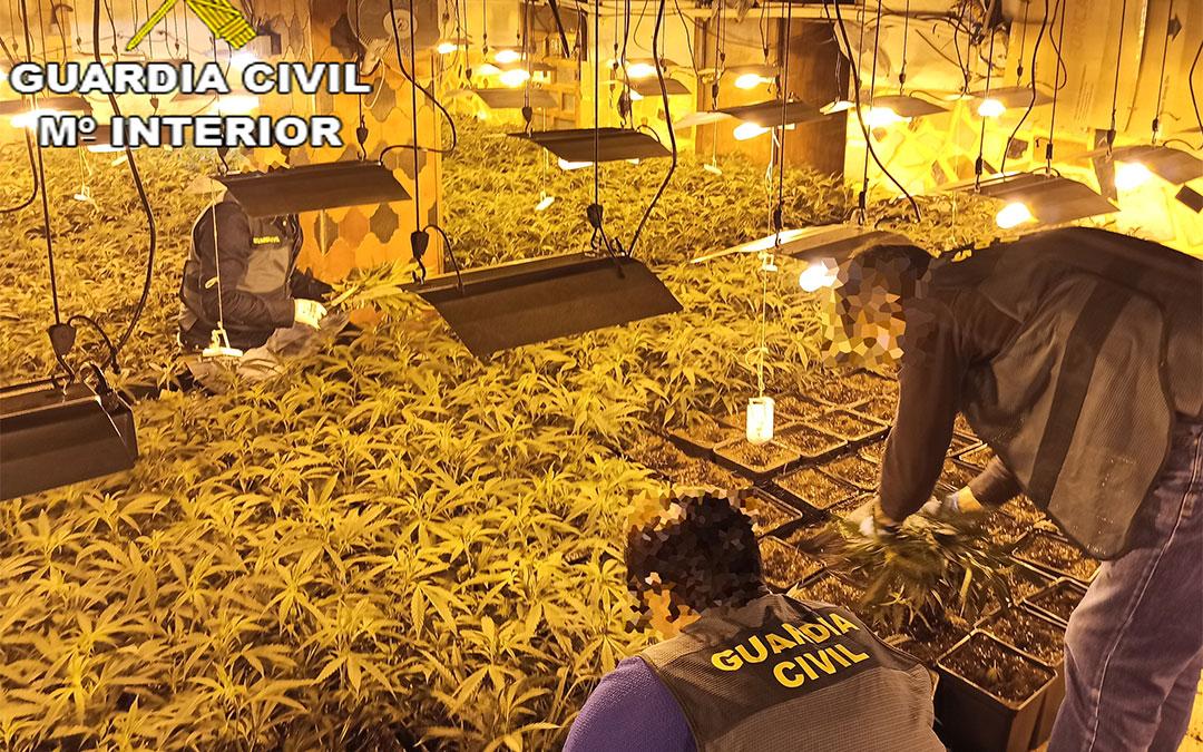 Plantaciones de marihuana indoor intervenidas por la Guardia Civil en la provincia de Teruel./ Guardia Civil