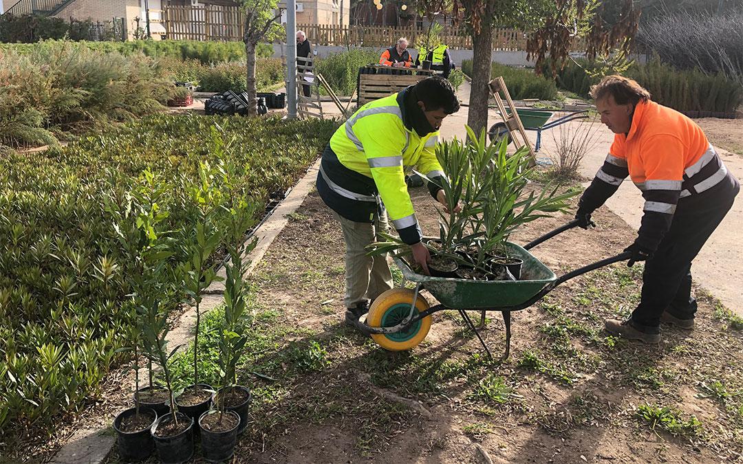 Trabajadores municipales plantando en zonas verdes./ DPZ