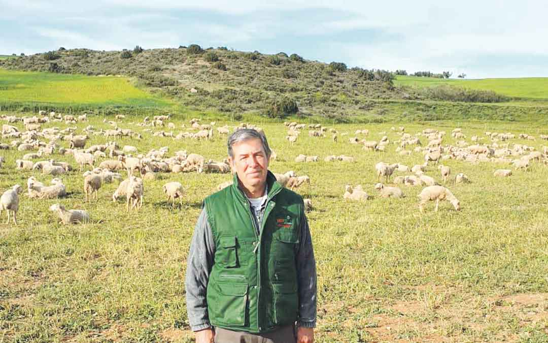 Juan Carlos Brun sacando a pastar al ganado, ayer / LA COMARCA
