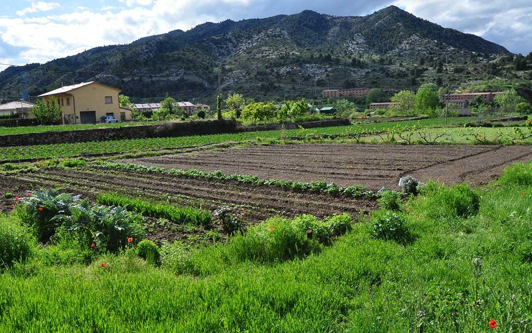 Los hortofruticultores piden poder atender sus huertos en plena época de siembra y de plantero./ De Luna