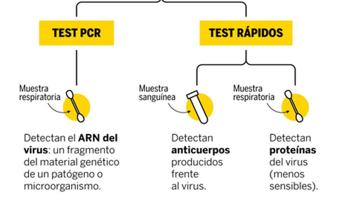 ¿Qué diferencia a los test rápidos de las pruebas PCR del coronavirus?