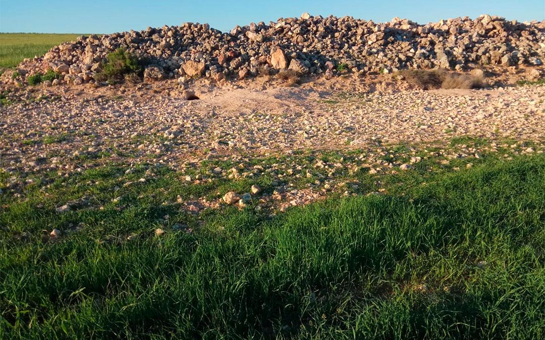 Plagas de conejos en el campo aragonés./ L.C.