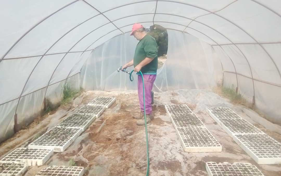 Víctor Vidal en uno de los invernaderos donde cría y almacena plantero.