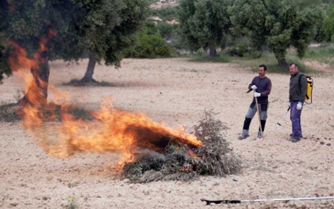 Imagen de archivo de la quema de poda de olivos./ Gobierno de Aragón