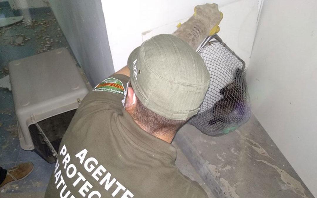 Los AAPN rescatan a las crías de garduña./ AAPN